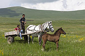 Young peasants in a cart pulled by a hitched mare and her foal, Caucasus, Georgia.