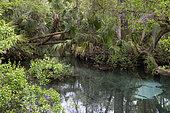 Ocala national forest, Floride, USA