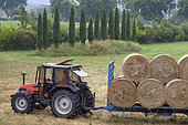 Collection of hay bales, Provence, France