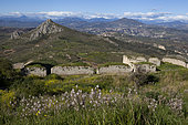 Branched asphodel (Asphodelus ramosus) and ruins, Peloponnese, Greece.
