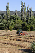 Putting the cut grass in row, Provence, France