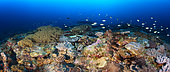 Panorama that highlights the biodiversity of a coral reef. Coral reefs are priceless treasures of biodiversity. they must be protected, their role is fundamental. Mayotte