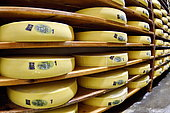Comté cheese making, cheese grinders in a maturing cellar, Cheese factory, Damprichard, Doubs, France