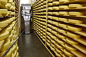 Comté cheese making, robot brushing cheese grinders in a maturing cellar, Cheese factory, Damprichard, Doubs, France