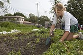 Volunteer works at the Earthworks Urban Farm, which grows fresh produce for the Capuchin Soup Kitchen, Detroit, Michigan, USA, North America