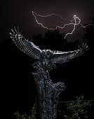 Tawny Owl (Strix aluco) in flight in front of storm at night, Salamanca, Castilla y León, Spain