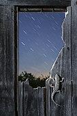Moorish Wall Gecko (Tarentola mauritanica) on an old wooden door at night, Spain