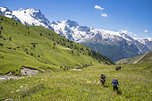 Hikers at the altitude of 1951 m on the path to the neck of Lake Goléon, Valley of the hamlet of Valfroide in the massif of Oisans with La Meije (3983m) in the background, Ecrins National Park, Hautes-Alpes , La France