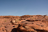 Central netted dragon (Ctenophorus nuchalis) on rock, King Canyons, NT, Australia