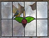Blue tit (Cyanistes caeruleus) perched inside an old window, England