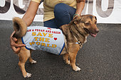 Crossed dog held by an ecologist and vegan activist during an event for animal rights, France