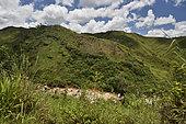 Déforestation dû à la culture sur brûlis (Tavy), Andasibe, Périnet, Région Alaotra-Mangoro, Madagascar