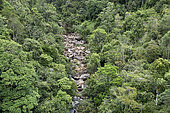 Canopy of the tropical rainforest, Andasibe, Périnet, Région Alaotra-Mangoro, Madagascar