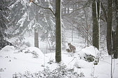 Winter in Bavarian National Park, Germany