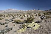 Chain of Cerros tutelares, Taapaca Volcanoes (left) and Ancoma (right), Lauca National Park, XV Region of Arica and Parinacota, Chile