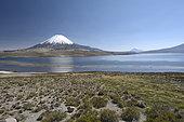 Chungara Lake and Parinacota Volcano, Lauca National Park, XV Region of Arica and Parinacota, Chile