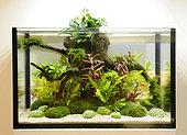 Planted freshwater aquarium