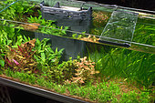 Freshwater aquarium with internal filter