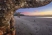 Coucher de soleil sur la plage de Bambo Ouest à coté de quelques Palétuviers parsemés sur la plage. Mayotte