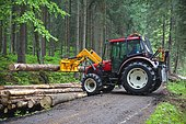 Tractor lifting a cut tree on a pile alongside a road in the woods