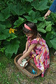 Girl picking a Scallop squash in the garden.