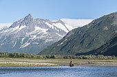 Grizzly bear (Ursus arctos horribilis) sitting in front of mountains, Katmai National Park, Alaska, USA