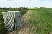 Photographic hide in a wheat crop, England