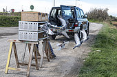 Letting go of pigeons for training, Pas de Calais, France