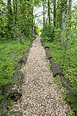 Alley covered with bark mulch in a garden, spring, Pas de Calais, France