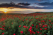 Poppies at sunset with a view of English Channel, France