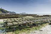 Cancale oyster farm at low tide, Brittany, France
