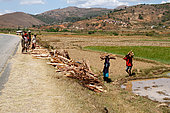 Deforestation in Madagascar, storage along the national road 7, 80% of the forest has disappeared, Madagascar center
