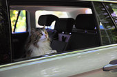 Cat in the back of a car
