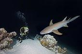 Female scuba diver looks at shark in the night, Tawny nurse shark (Nebrius ferrugineus), Indian Ocean, Maldives, Asia