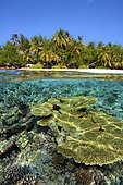 Coral reef off the island of Angsana (formerly Ihuru), Split-Level, North Male Atoll, Maldives, Asia