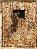 House sparrow (Passer domesticus) coming out of an electricity box, Spain