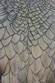 European Shag (Phalacrocorax aristotelis), adult's feathers close-up, Hornøya, Finnmark, Norway