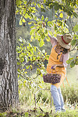 Woman picking nuts in autumn.