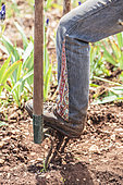 Tillage at the grelinette. Avoid returning the soil and preserve the organization of soil layers.