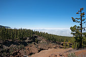 Above the clouds, Road of the Pico del Teide, Tenerife, Canary Islands, Spain
