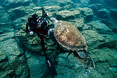 Green Turtle (Chelonia mydas) and diver, Tenerife, Canary Islands, Spain, Atlantic Ocean