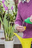 Woman bringing liquid fertilizer to an orchid.