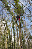 Rescue Operation of a Cat Stuck in a Tree, France