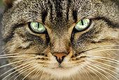 Cat's Eye, France