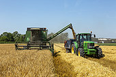 Barley harvest, England