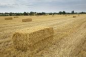 Straw bale in a field, England