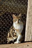 Domestic cat on a farm, France