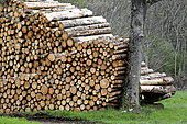 Storage of fir wood bordering forest in Bondeval, Doubs, France