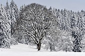 Snow landscape in Haut-Doubs, France, on the Swiss border