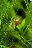 Snail on aquarium plant